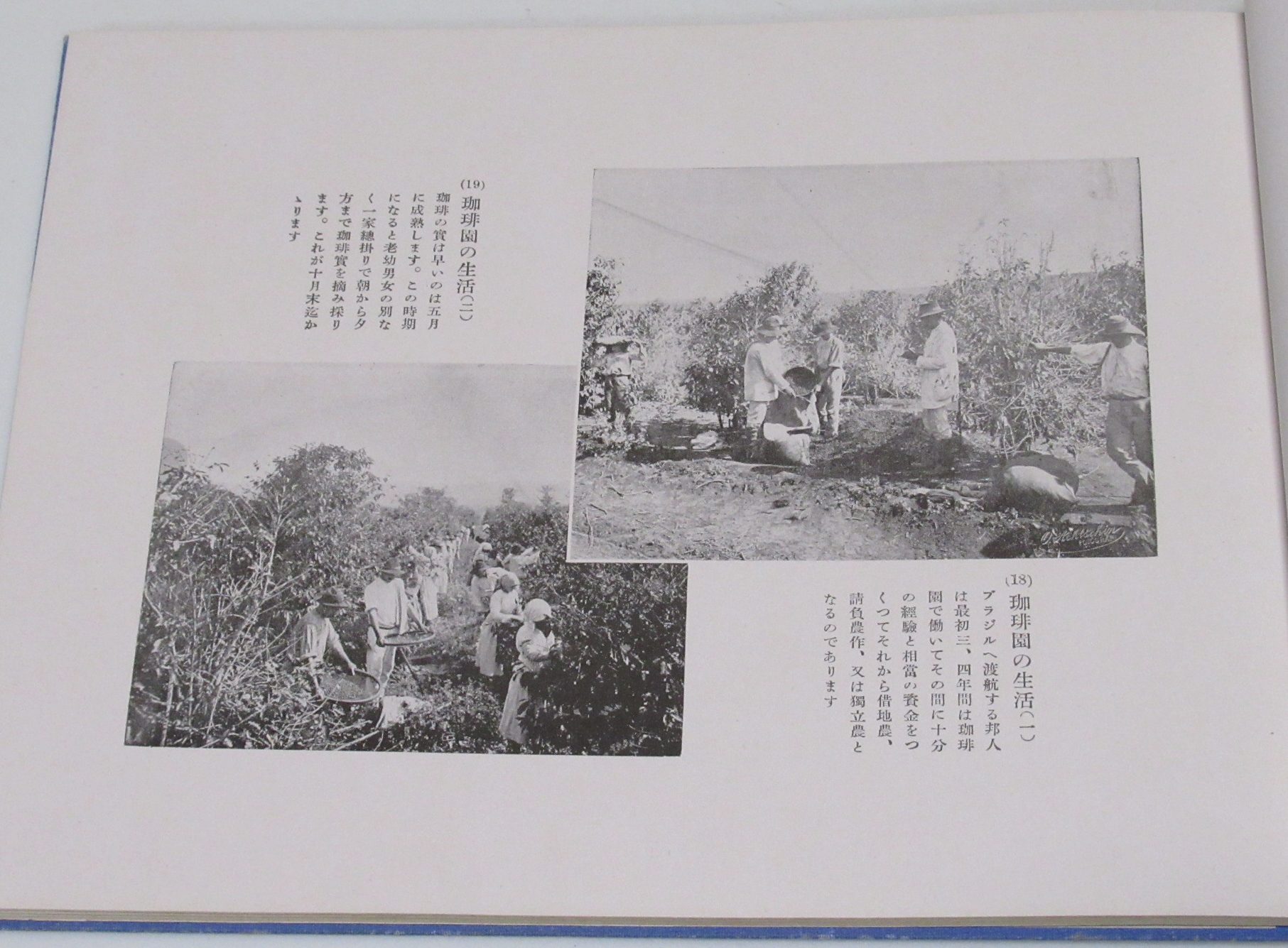 ブラジル写真帖 海外興行株式会社 昭和2年 移植民 植民地